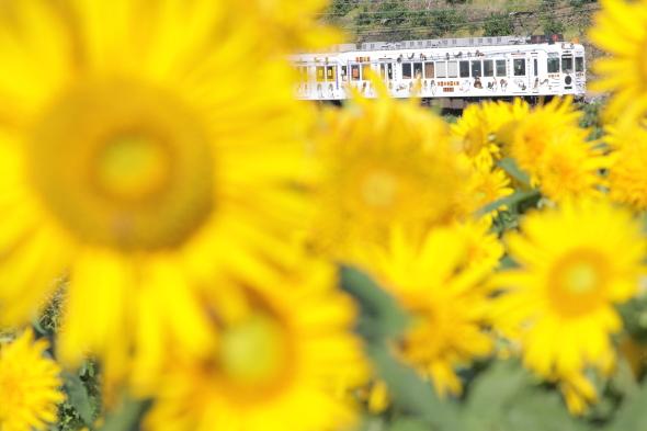 2014/7/26 和歌山電鐵貴志川線 吉礼~伊太祈曽