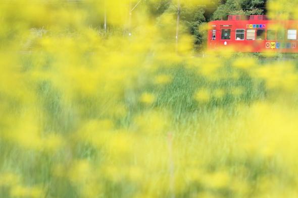 2014/7/26 和歌山電鐵貴志川線 大池遊園~西山口