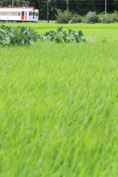 2014/8/11 和歌山電鐵貴志川線 大池遊園~西山口