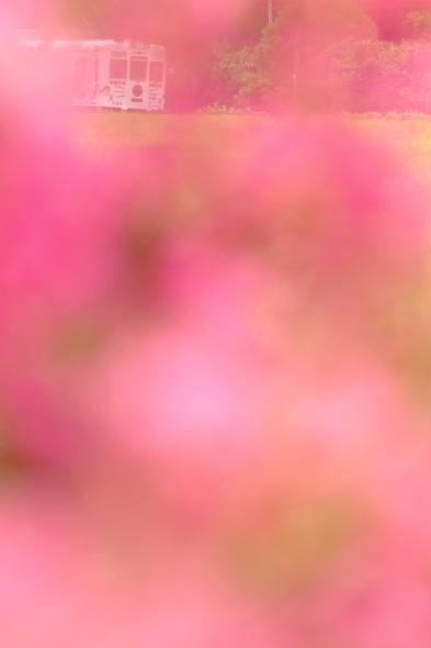 2014/8/23 和歌山電鐵貴志川線 大池遊園~西山口