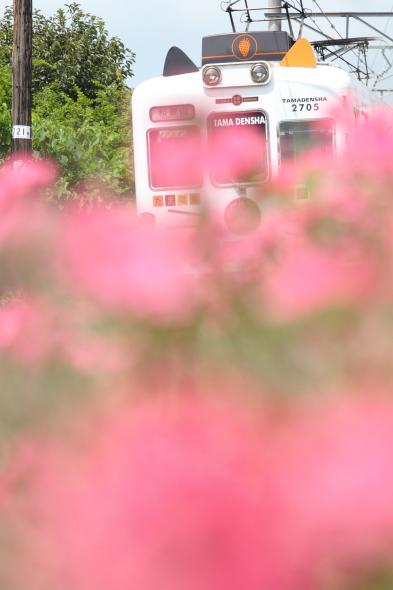 2014/8/26 和歌山電鐵貴志川線 甘露寺前~貴志