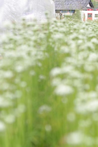 2014/9/6 和歌山電鐵貴志川線 大池遊園~西山口