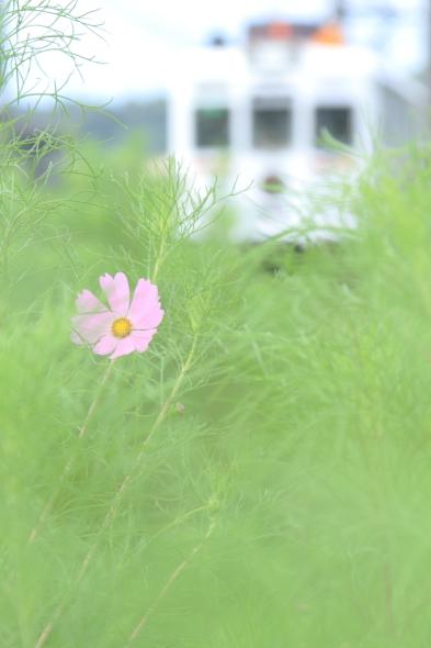 2014/9/13 和歌山電鐵貴志川線 吉礼~伊太祈曽