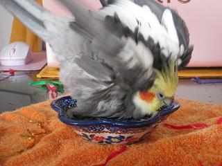 フク水浴び01