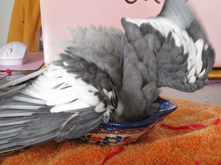 フク水浴び02