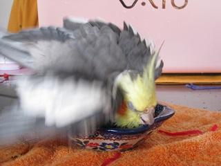 フク水浴び03