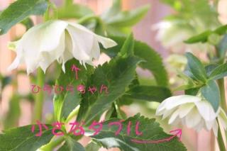 14_02_24_wddsmall_furifuri.jpg