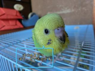 せいちゃん1-1