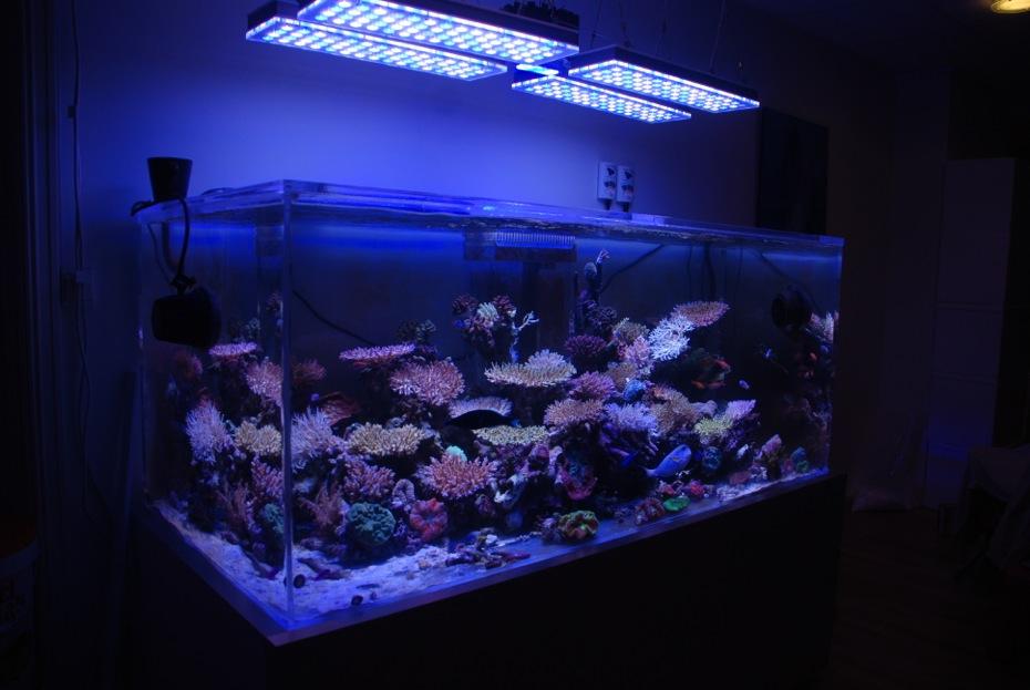 SPS-reef-tank.jpg