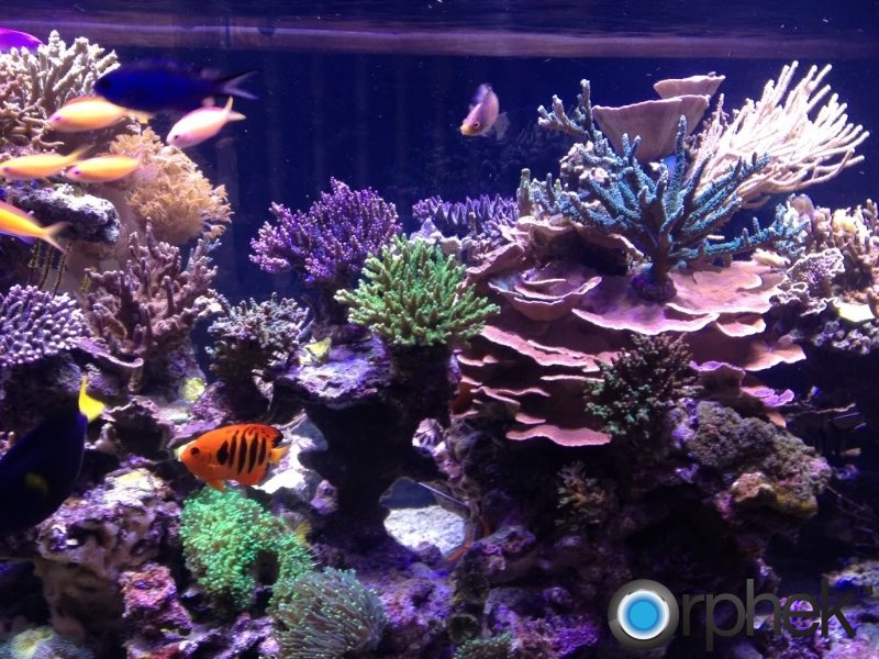 coral-tank-from-canada-with-orphek-leds.jpg
