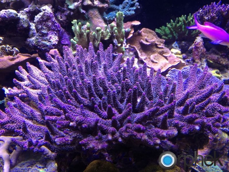coral-tank-from-canada.jpg