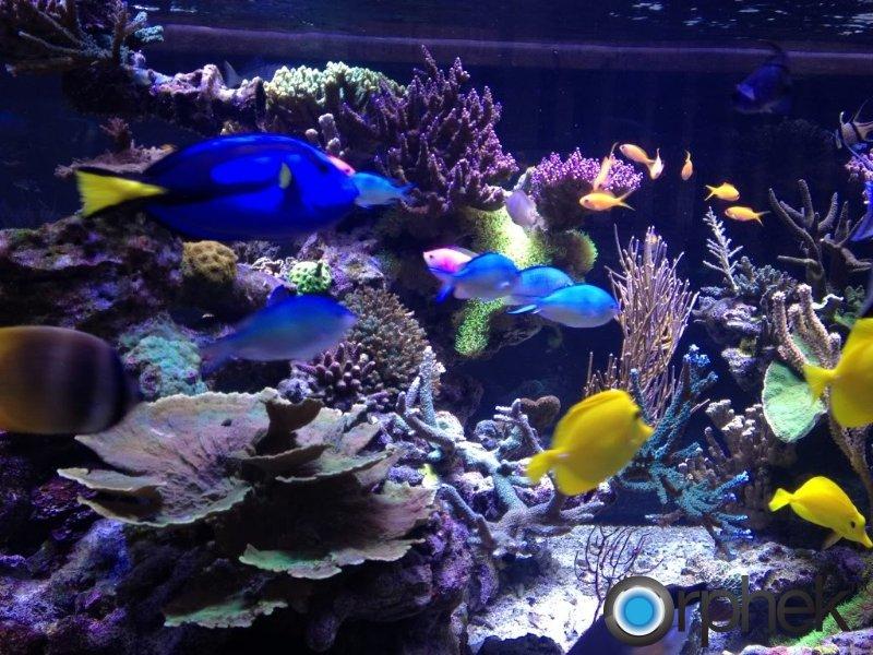 coral-tank-led-lighting.jpg