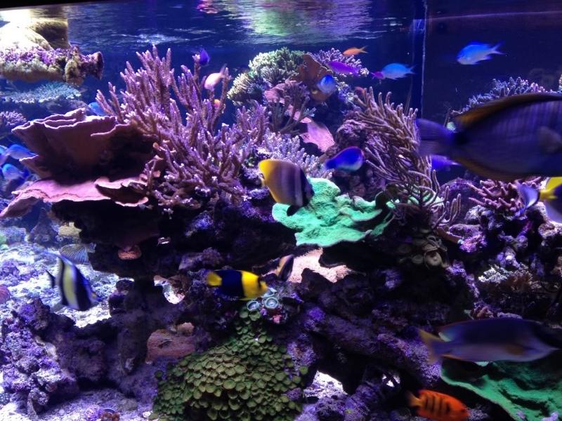 coral-tank-orphek-led-lighting.jpg