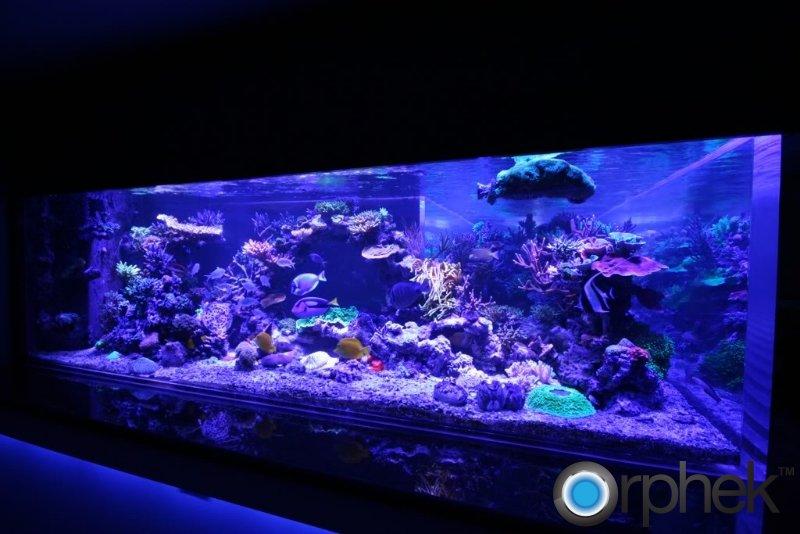 coral-tank-orphek-moonlight-led-lighting.jpg