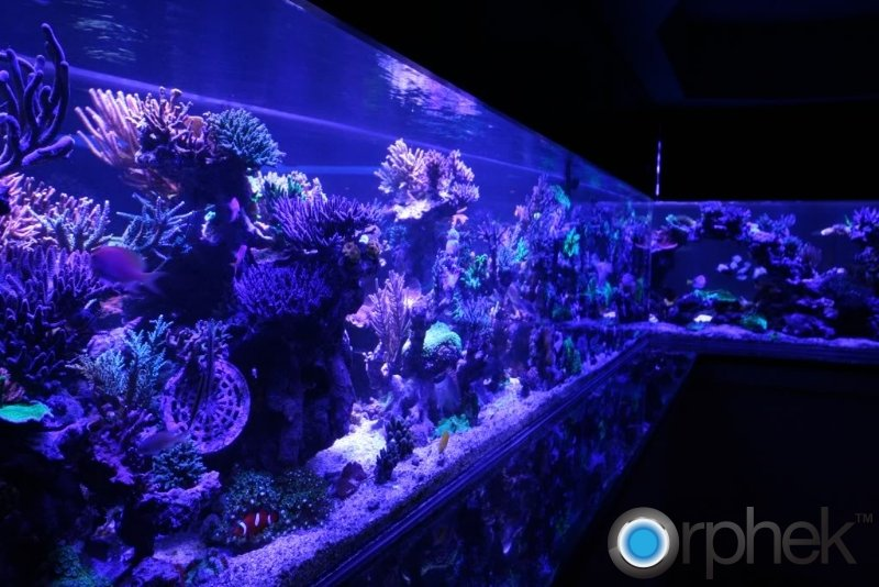 moonlights-orphek-coral-tank-from-canada.jpg
