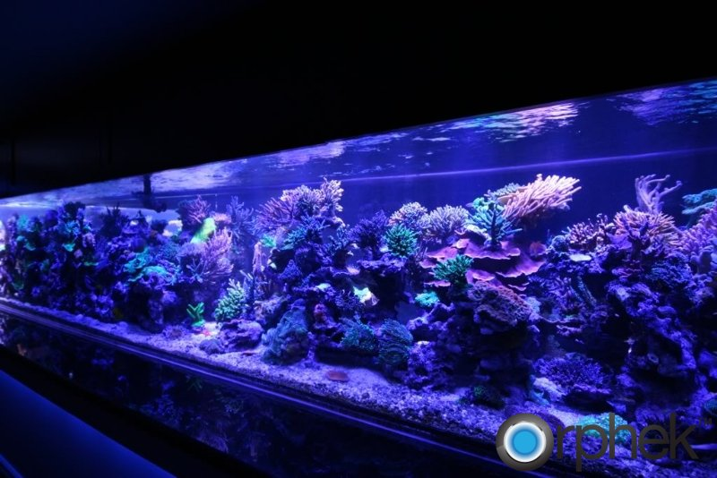 peter-coral-tank-from-canada-3500-gallon-moonlight-led.jpg