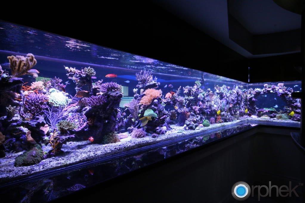 reef-aquarium-led-lighting-by-orphek.jpg