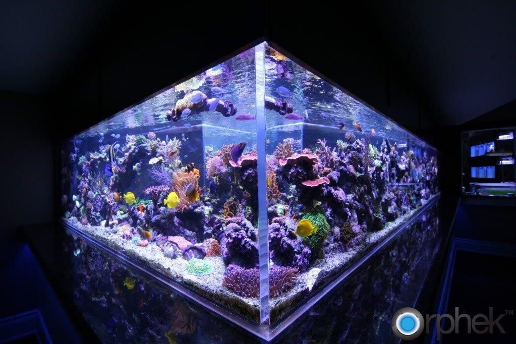 reef-aquarium-led-lighting.jpg