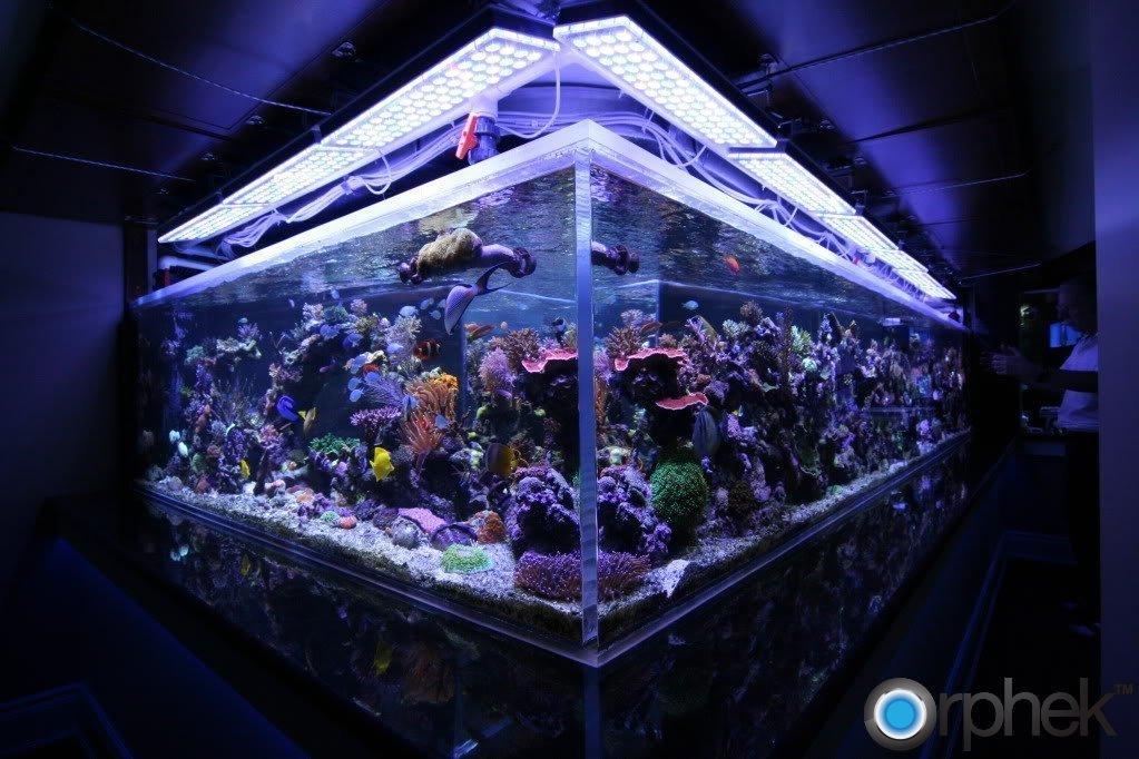 reef-aquarium-led-orphek-lighting.jpg