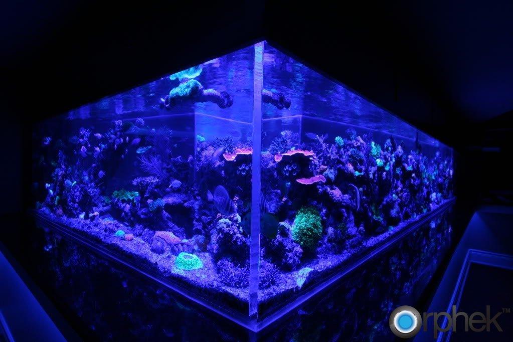 reef-aquarium-moonlight.jpg