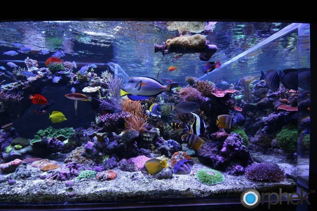 reef-tank-led-light.jpg