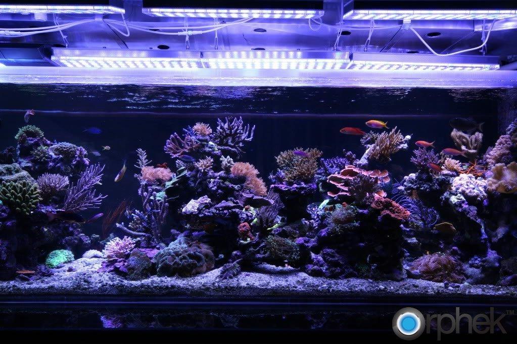 reef-tank-led-orphek.jpg