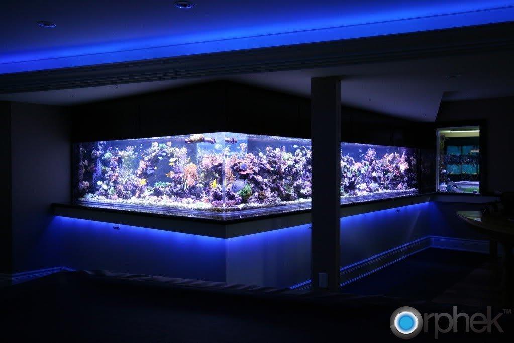 reef-tank-lighting.jpg