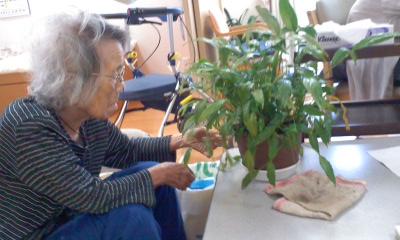 園芸係のK様96歳傷んだ葉っぱの摘み取り