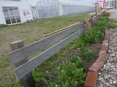 [写真]アランがキンセンカの花だけを食べてしまった受付ハウス前の花壇の様子
