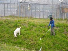 [写真]農園主とアランが土手の草刈りをしている様子