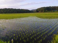 [写真]朝6時、農園前の田んぼに三舟山が映っている様子