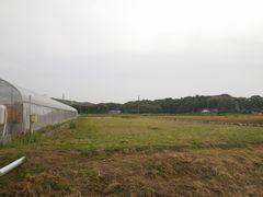 [写真]梅雨入り前に草刈りを終えたベアハウス西側の様子