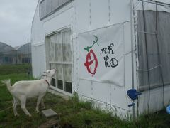 [写真]受付ハウス正面入口で立ち止まるヤギのアラン