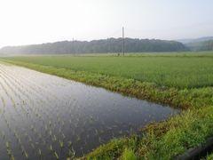 [写真]早朝5時、農園前の田んぼの様子