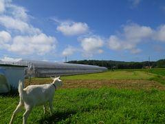 [写真]農園南側の空と雲を眺めるアランの後姿