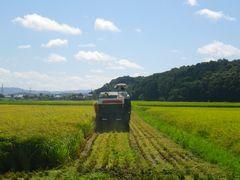 [写真]農園前の田んぼの稲をコンバインが刈り取っているところ