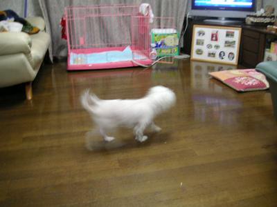 yuki19_p.jpg