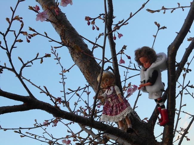 33 木登り上手