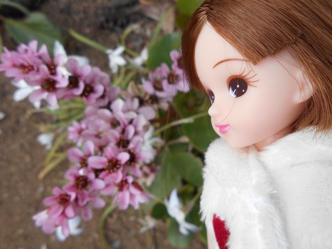 12 リカちゃんと庭の花