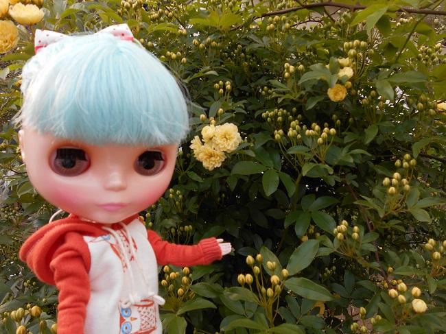 4 リサと黄色い花