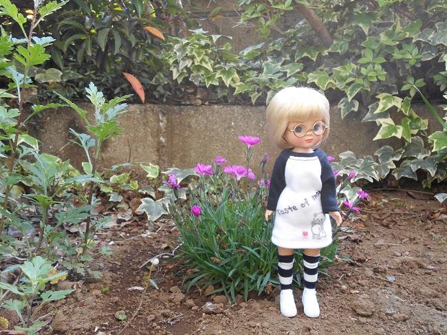 15 in the little garden