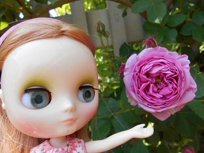 7 Mona pink rose