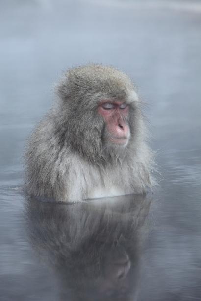 瞑想 サル