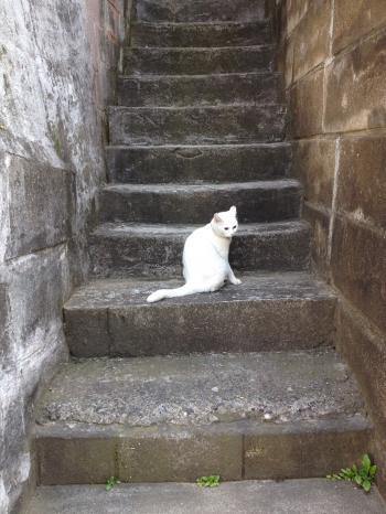 しろちゃん階段