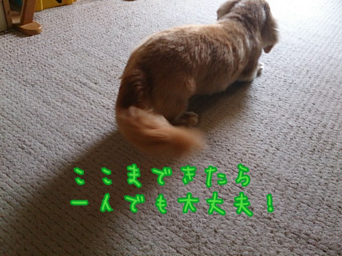 14051027790.png