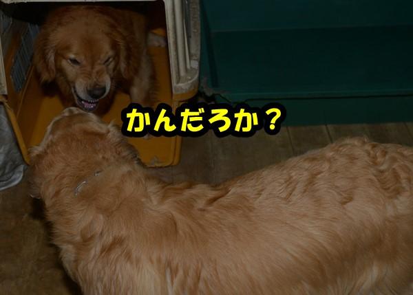 DSC_6179.jpg