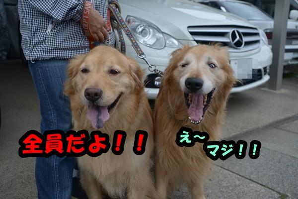 DSC_6248_2014052321310354d.jpg