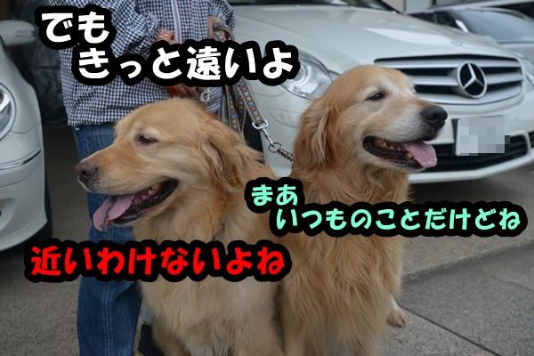 DSC_6250_20140523213102a4b.jpg