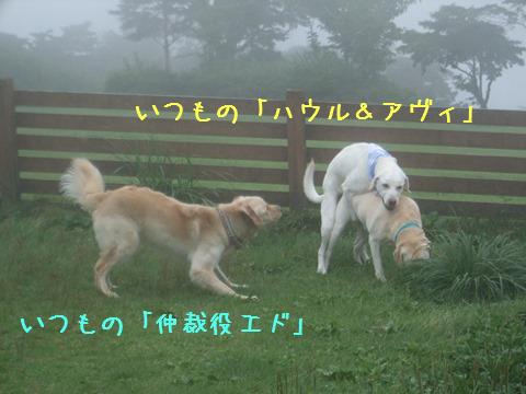 030_20140823111459597.jpg