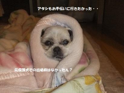 元保護犬のキラナおばさん